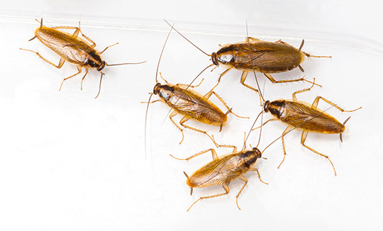 Residential Pest Control West Delhi, Home Pest Control West Delhi, Commercial Pest Control West Delhi, Hotel Pest Control West Delhi, Hospital Pest Control West Delhi, Malls Pest Control West Delhi, Society Pest Control West Delhi